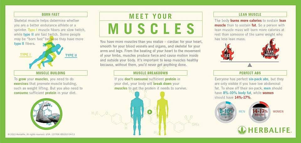 meet-your-muscles