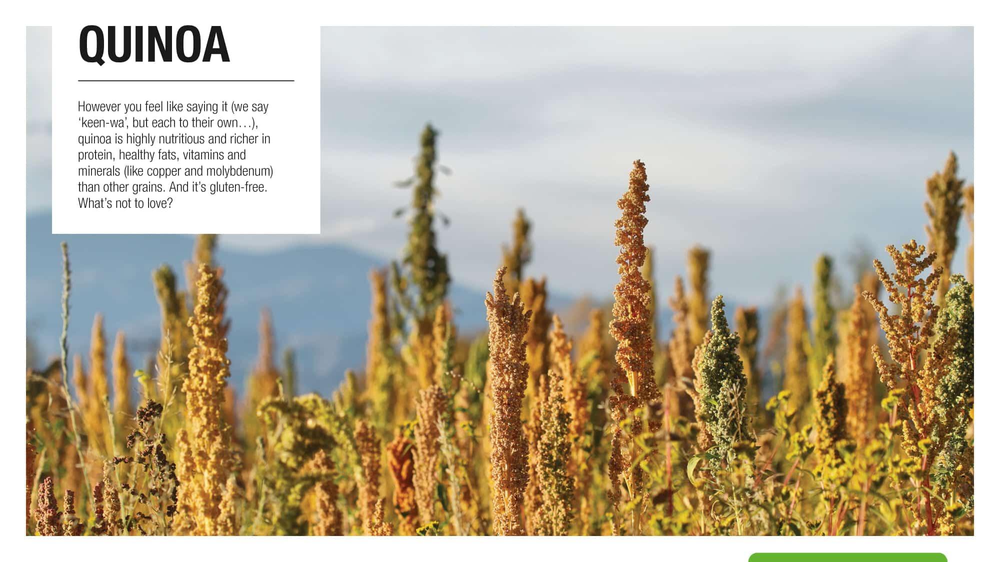 quinoa-protein