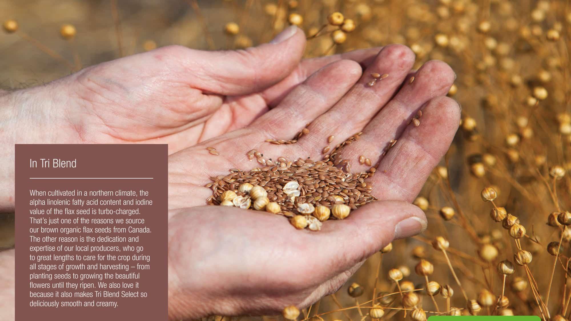 tri-blend-flax-seed